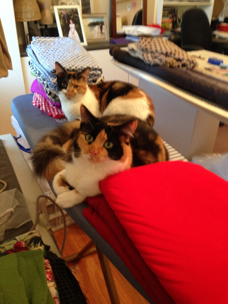 Kitties on Ironing Board